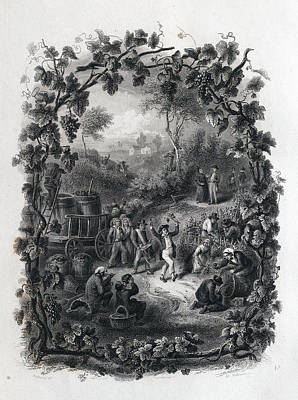 The Grapes Harvest In France Art Print by French School