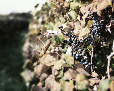 The Grapevines Art Print by Lisa Russo