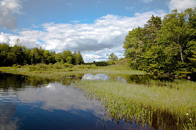 Hdr Photograph - The Grasses On The Moose River by David Patterson
