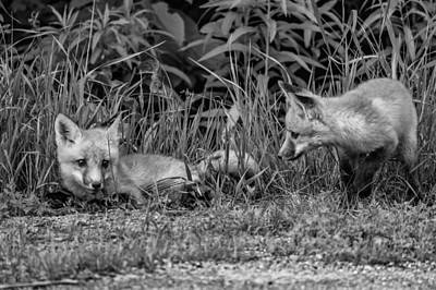 Animal Photograph - The Great Adventure Monochrome by Steve Harrington