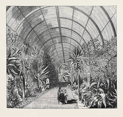Conservatory Drawing - The Great Chatsworth Conservatory The Interior by English School