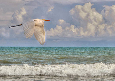 The Great Egret And The Ocean Art Print