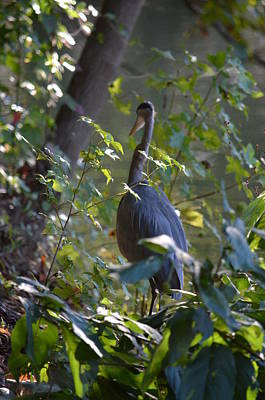 Photograph - The Great Heron's Woodland Walk by Maria Urso