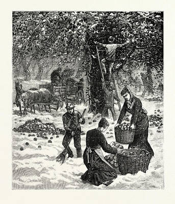 Storm Drawing - The Great October Storm, Farmers Hastily Gathering by American School