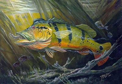 Painting - The Great Peacock Bass by Terry  Fox