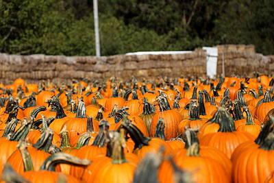 Olantern Photograph - The Great Pumpkin Gang by Scott Hill