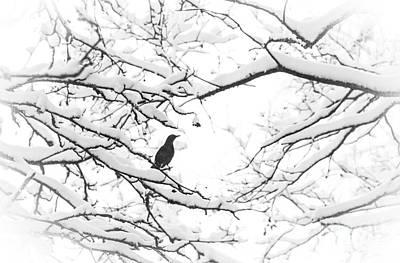 Photograph - The Greatest Treasure by Ismo Raisanen