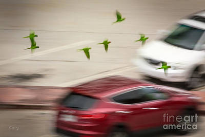 Photograph - The Green Angels Low Flight Formation by Rene Triay Photography
