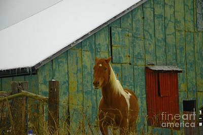 The Green Barn Art Print