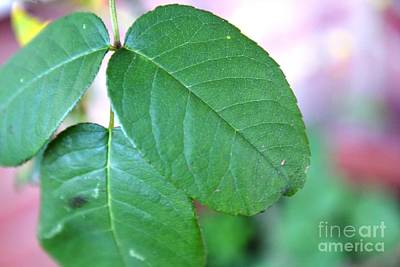 Photograph - The Green Leaf by Aqil Jannaty