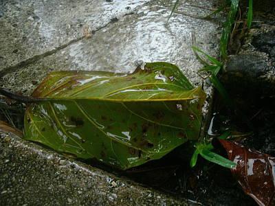 The Green Leaf Art Print
