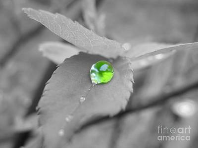 The Green Pearl Art Print by Patti Whitten