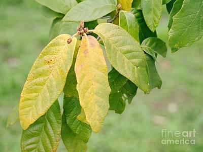 Moody Trees - The Green Three by Gary Richards
