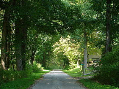 Photograph - The Green Tunnel by Lew Davis