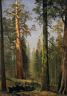 Sequoia Painting - The Grizzly Giant Sequoia Mariposa Grove California by Albert Bierstadt