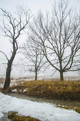 Photograph - The Groundhog Lied by Deborah Smolinske