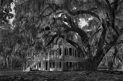 Photograph - The Grove 07 Bw by Jim Dollar