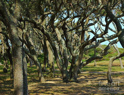 Photograph - The Grove At Fort Fisher by Bob Sample