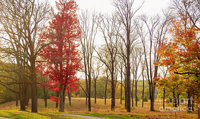 Photograph - The Grove At Valley Forge by Rima Biswas
