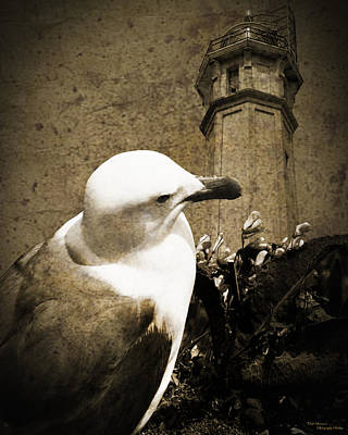 The Gull Art Print