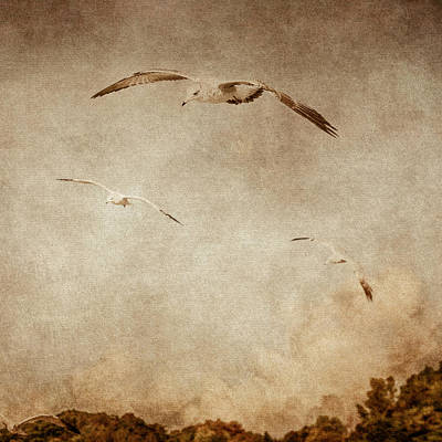Digital Art - The Gull Sees Farthest Who Flies Highest by Eduardo Tavares