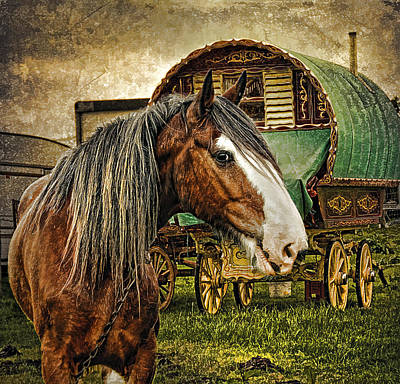The Gypsy Vanner Art Print