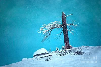 Photograph - The Half Tree by Tara Turner