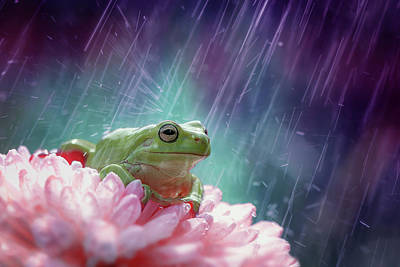 Amphibians Wall Art - Photograph - The Happy Rain by Ahmad Baihaki