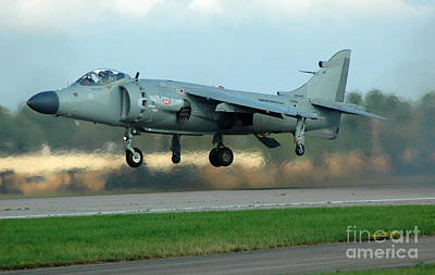 Photograph - The Harrier  by Jennie Stewart