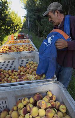 Photograph - The Harvest by Rich Berrett