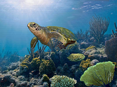 Painting - The Hawksbill Sea Turtle by IM Spadecaller
