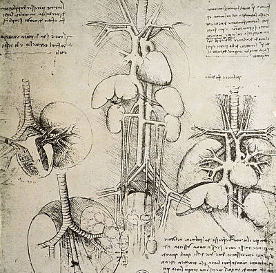 Da Vinci Drawing - The Heart And The Circulation by Leonardo Da Vinci