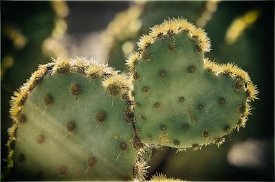 Heart Wall Art - Photograph - The Heart Of A Cactus  by Saija  Lehtonen
