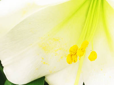 Photograph - The Heart Of An Easter Lily by Luther Fine Art