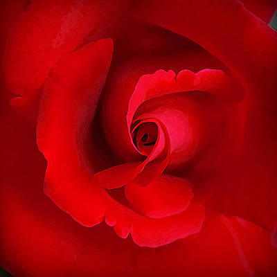 Photograph - The Heart Of The Rose by CarolLMiller Photography