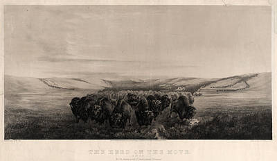 N.y Painting - The Herd On The Move  Painted & Drawn By W.j. Hays  Printed by Litz Collection