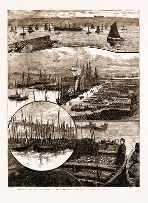 Herring Drawing - The Herring Fishery At Caithness, Uk 1. Wick Harbour Boats by Litz Collection