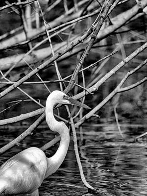 Photograph - The Hidden Egret  by Joshua House