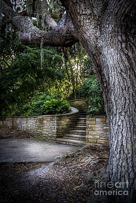 Palmetto Plants Photograph - The Hidden Steps 2 by Marvin Spates