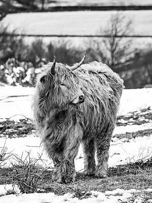 Photograph - The Highland Cow Black And White by Linsey Williams