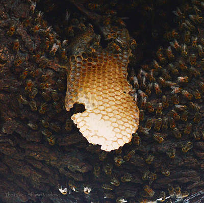 The Hive  Art Print by Shawn Marlow