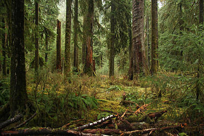 Photograph - The Hoh Rainforest by John Bushnell
