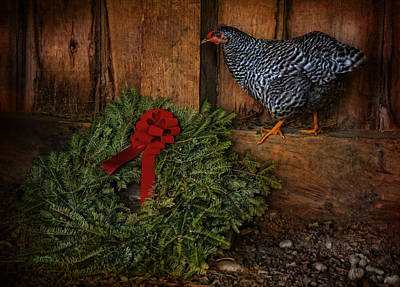 Photograph - The Holiday Hen by Robin-Lee Vieira