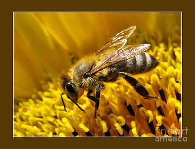 Photograph - The Honey Bee by Daliana Pacuraru