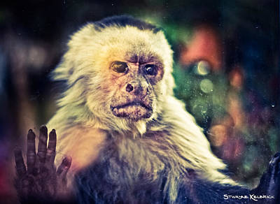 Photograph - The Hopeless Ape by Stwayne Keubrick