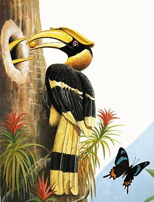 Toucan Drawing - The Hornbill by R.B. Davis