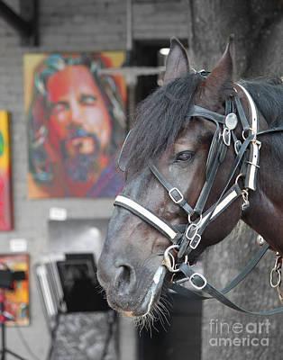 Lebowski Photograph - The Horse Abides by Robert Yaeger
