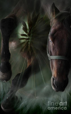 Dandelion Digital Art - The Horse And The Dandelion by Angel  Tarantella