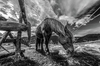 Photograph - The Horse by Faris