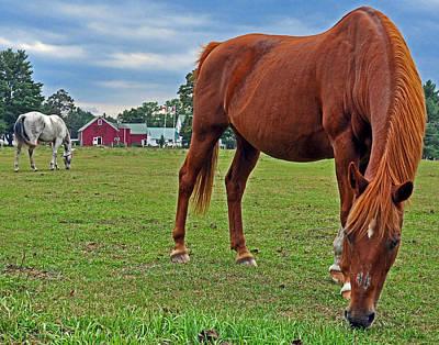 Cartoons Tees - The Horse Farm 01 by Jeff Stallard